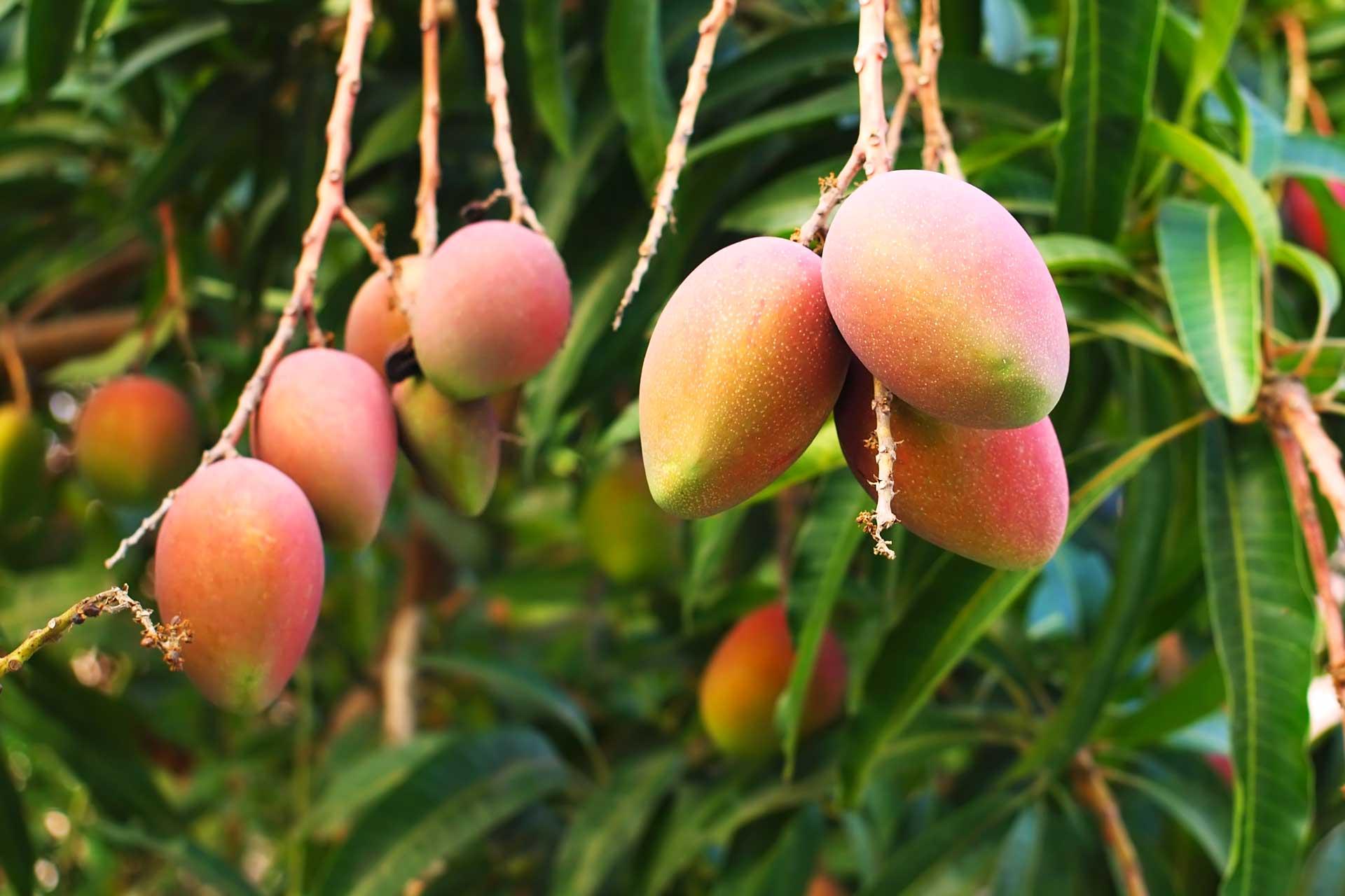 Home - Dennick FruitSource